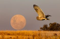 Full Moon Rising, Moon Rise, Owls, Celestial, Outdoor, Beautiful, Outdoors, Outdoor Games, Owl
