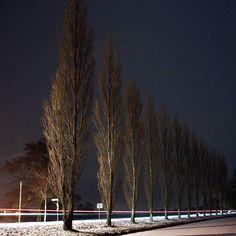 Pappeln I'm Park #winterwonderland #snow #pappeln #nightshot #photography #anthez #wörlitz #sachsenanhalt #park #night #langzeitbelichtung @nancy.sem