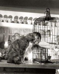 "photosofthehistoryandwithhstory: "" Child, Cat and Dove by Robert Doisneau """