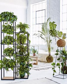 Our new March issue is as fresh as this idea for displaying indoor plants featured within it! The issue is out now at newsagents and digitally (all over the globe) via Zinio Nook Google Play and iTunes - could be a good weekend activity? For 9 more unforgettable ideas for displaying indoor plants hit the link in our profile. Production by Marissa Pretorious/bureaux.co.za. Styling by Sven Alberding/bureaux.co.za. Photography by Warren Heath/bureaux.co.za. by insideoutmag