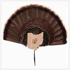 Turkey Fan and Beard Mount