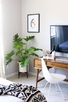 Lovely combination of white with wood furniture. The green lavish plant gives it a added warmth.
