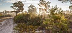 Seabranch Preserve State Park - http://www.activexplore.com/activity/seabranch-preserve-state-park/
