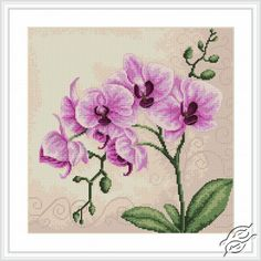 Orchid - Cross Stitch Kits by Luca-S - B2227