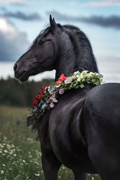 Horse photography nrw horse photos diana klee photography friesian stallion with floral decoration this picture was taken during the photo shoot luebbi animalphotography diana horse klee landscapephotography nrw photography photos weddingphotography Cute Horses, Pretty Horses, Horse Love, Diy Horse, Most Beautiful Horses, Animals Beautiful, Cute Animals, Black Horses, Wild Horses