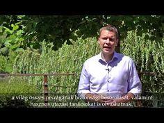 Felhívás az új koronavírussal kapcsolatban | Magyarország Nagykövetsége <br> Tokió Polo Shirt, Mens Tops, Style, Swag, Polos, Polo Shirts, Polo, Outfits