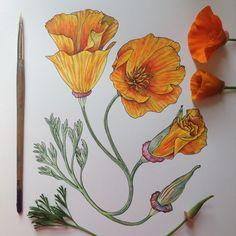 cali poppy love  http://noelbadgespugh.storenvy.com/