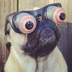 I love this. #pug #funny