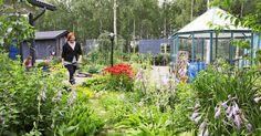 """Lapissa kasvukausi on lyhyt, mutta Marin puutarhasta sitä ei uskoisi. Onnistumisen takaavat oikeat kasvivalinnat ja kärsivällinen luonne. """"Tykkään ihan oikeasti kitkemisestä ja nyppimisestä"""", puutarhuri kertoo."""