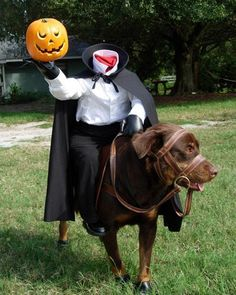 Dog dressed up as the headless horsemans horse. Perfect diy dog costume.