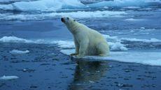 El deshielo del Ártico alcanzará un récord mínimo histórico – RT