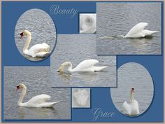 Beauty and Grace, by Bobbee Rickard swan collage, prints and more; wall art for home, business, salon and more.