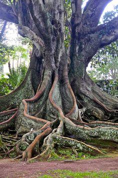 Saga Sapphire cruise Saga, Cruise, Sapphire, Trees, Drawings, Nature, Plants, Naturaleza, Cruises