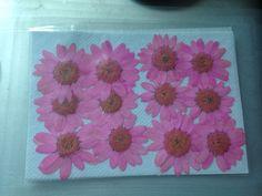 Zinnias;Pink Flowers;Dried Flowers;Dry Flowers;Pressed Flowers;Flowers;Crafts  | eBay