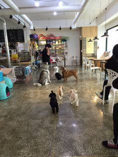 Bau house dog cafe in seoul corea del sur del sur y locales for Boutique hotel xym pyeongtaek