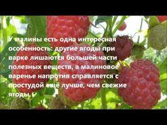 Растения вместо аспирина 01