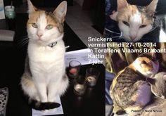 Snickers vermist sinds 27 oktober 2014 in de Krokussenlaan te Teralfene. Zij is een kattin van 7 jaar en hun baasjes missen haar enorm. Wie haar gezien heeft kan telefoneren naar 0491/36 01 86 of 0494/80 11 64