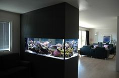 Unique Fish Tank Ideas | Archives: Modern Aquarium design for reef aquaria and freshwater