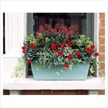 Ideas for the winter window box