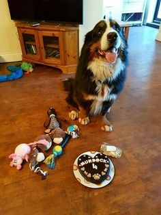A year ago we made a cake for this absolutely gorgeous boy, which was the first ever cake to leave the Faerytails barkery. He turned 4 yesterday and celebrated with another Faerytails cake. Happy birthday to the handsome Murdock!! :) <3