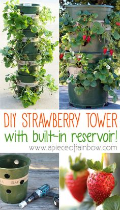 DIY Strawberry Tower With Reservoir! Nothing beats fresh ripe strawberries! Yet they can take up lots of space to get big yields. With this DIY Strawberry Tower you can grow almost 50 plants in one… Strawberry Tower, Strawberry Garden, Fruit Garden, Edible Garden, Herb Garden, Vegetable Garden, Strawberry Planters Diy, Garden Web, Balcony Garden