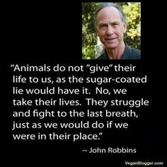 """""""Animals do not 'give' their life to us, as the sugar-coated lie would have it. No, we take their lives. They struggle and fight to the last breath, just as we would if we were in their place."""" - John Robbins ***John Robbins is truly an incredible human being; a very special person on this earth."""