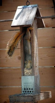 """""""Oops!  I didn't think this all the way through!"""" said the squirrel."""