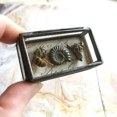 Natural History Pocket Museum - Glass Box Assemblage Art Object. $44.00, via Etsy.