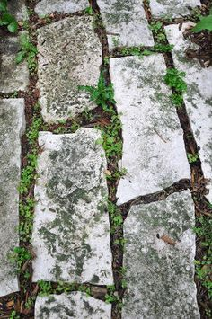 Do NOT use dish soap, vinegar, or laundry detergent in your yard- even on sidewalks or patios! See more: The Truth About Natural Weed Killer Exposed