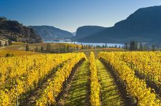 Columbia Valley Vineyards | ... times in British Columbia! Drink up stunning scenery and superb wines