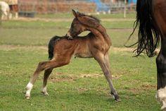 Foal stock 32 by Bundy-Stock on deviantART