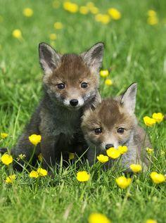 Spring baby animals.  #SpringatSimplyBe