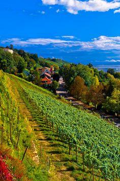 Wandel of fiets door de wijngaarden. En las geregeld een pauze in om van de heerlijke wijnen te proeven.