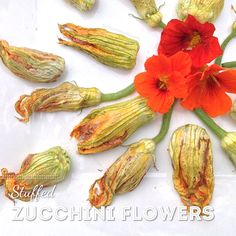 Stuffed Zucchini Flowers with a cashew-olive-roast red pepper filling that also doubles as a 'hummus' dip on its own. Grain Free, Dairy Free, Zucchini Flowers, Hummus Dip, Stuffed Zucchini, Organic Seeds, Roasted Red Peppers, Recipe Recipe, Plant Based Recipes