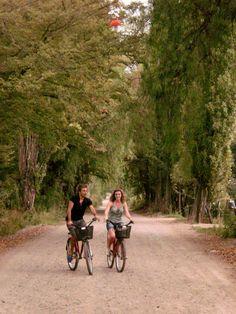 vinas y bicicletas