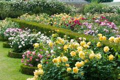 Rose garden. All things bright and beautiful.... : Photo