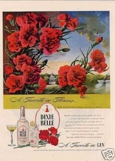 Dixie Belle Gin Ad Carnation (1946)