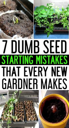 Today, we are going to discuss about the common seed starting mistakes which need to be avoided for hiking up your success rate. Check out these Seed starting mistakes that everyone makes. gardening 7 Dumb Seed Starting Mistakes That Everyone Makes Veg Garden, Lawn And Garden, Vegetable Gardening, Garden Soil, Garden Boxes, Easy Garden, Greenhouse Gardening, Container Gardening, Balcony Gardening