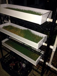 Our first week testing the solar powered watering system with our wheat growing...