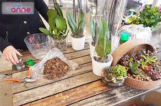 Orkide Bakımı, Çoğaltımı, Saksı Değişimi, Kurtarma, Çiçek Açtırması Nasıl Yapılır ? - Canım Anne