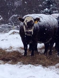 Managing Cattle And Other Livestock During Extreme Cold Weather