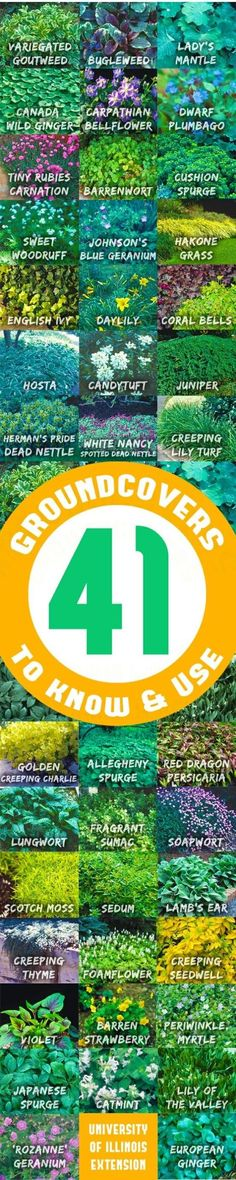 41 Ground covers to Use! So many varieties, SUPER Informative