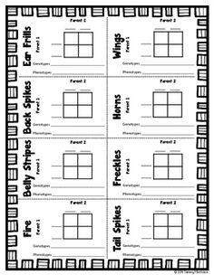 punnett square worksheet middle school pdf