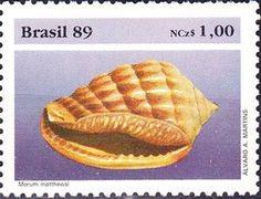 Sea Snail (Morum matthewsi)