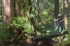 West Coast Trail   West Coast Trail - Old Growth