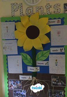 Science Classroom Displays Activities 32 Ideas For 2019 Classroom Display Boards, Classroom Bulletin Boards, Classroom Fun, Classroom Displays, Biology Classroom, Classroom Quotes, Teacher Quotes, Science Quotes, Science Lessons