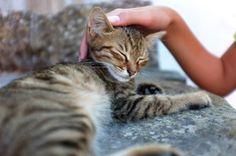 TLC from humans staves off respiratory infections in shelter cats