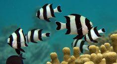 Fish will flee the tropics if ocean temperatures warm