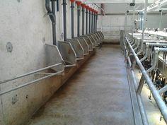 Milking Parlours