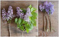Stolen Lilacs always smell best
